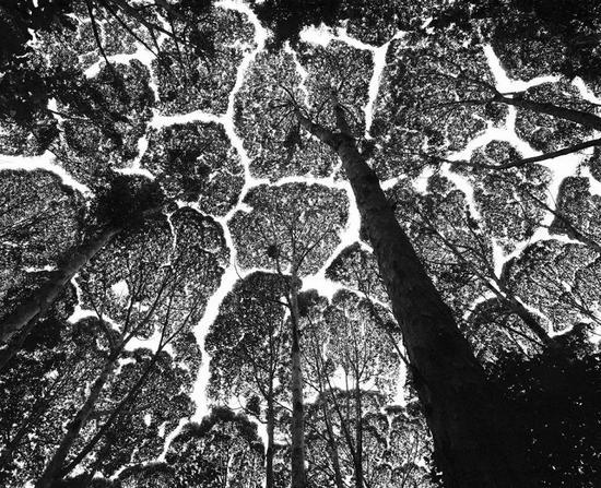 植树造林,让地球降温还是升温?